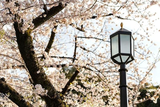 Pretty white peach tree blossom