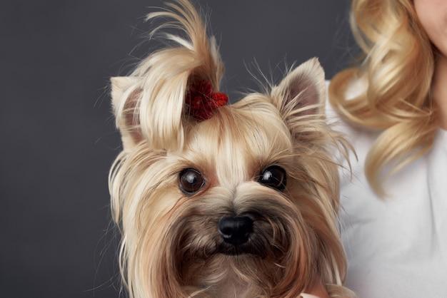 きれいな女性小さな犬の楽しいスタジオ暗い背景