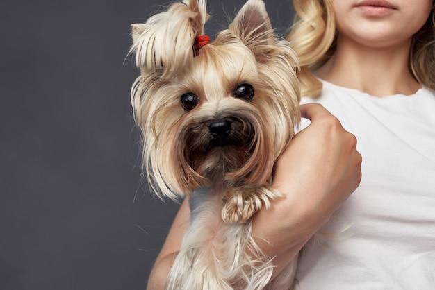 きれいな女性の血統犬ファッションライフスタイル孤立した背景