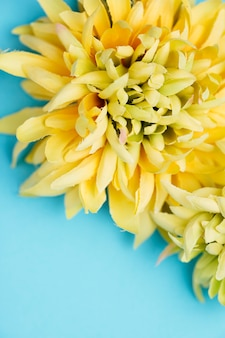 Pretty yellow flowers on blue background