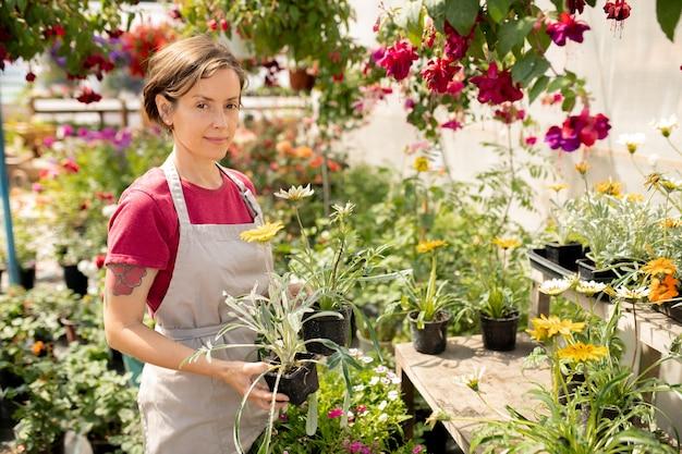 市場で販売する新しい種類の植物を選択しながら鉢植えの花を保持しているエプロンのかなり若い庭師