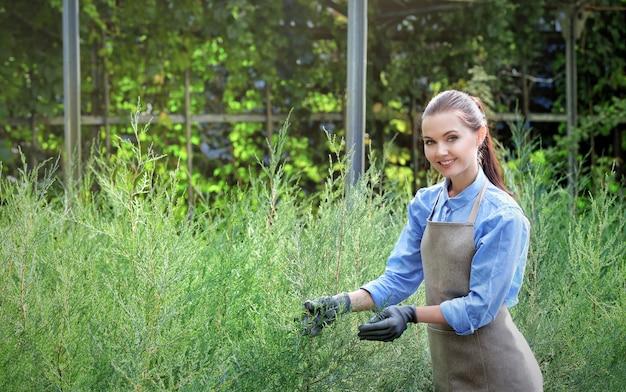 Довольно молодой садовник, ухаживающий за можжевельником в теплице