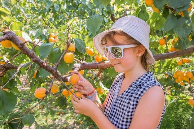 예쁜 어린 소녀는 여름 아름다운 날에 살구를 수확합니다