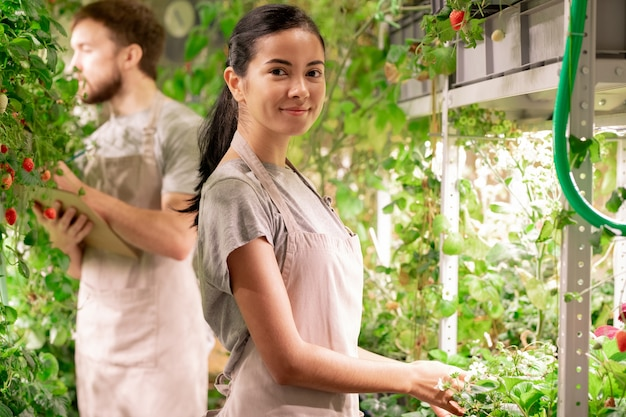 Pretty young successful gardener in apron looking at you while taking care of growing strawberry bushes in greenhouse