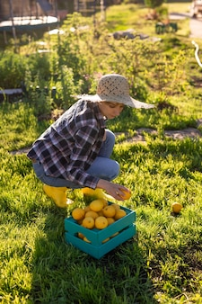 Pretty young woman gardener in hat picks lemons in a basket in her vegetable garden on a sunny