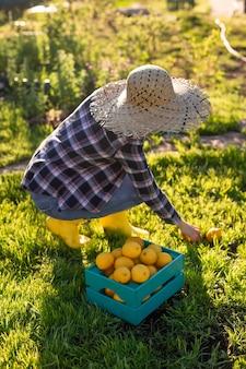 帽子をかぶったかなり若い女性の庭師は、晴れた夏の日に彼女の菜園のバスケットでレモンを選びます。ガーデニングと農業の概念