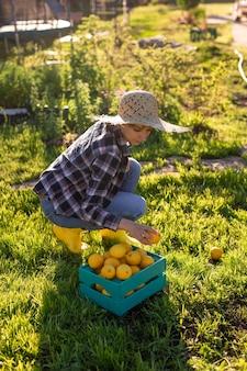 帽子をかぶったかなり若い女性の庭師は、日当たりの良い菜園のバスケットでレモンを選びます