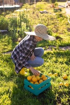 모자에 예쁜 젊은 여자 정원사는 그녀의 야채 정원에서 바구니에 레몬을 선택