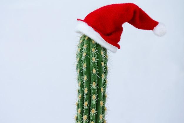 Колючий кактус в новогодней шапке. концепция празднования рождества и нового года.