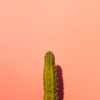 Prickly pear cactus on colored background