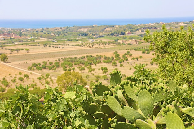 Prickly pear cactus and vegetation in valley of the temples, agrigento, sicily
