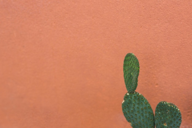 Prickly pear nopales cactus against brown background