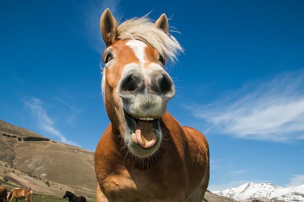 Primoiano di un cavallo pazzo