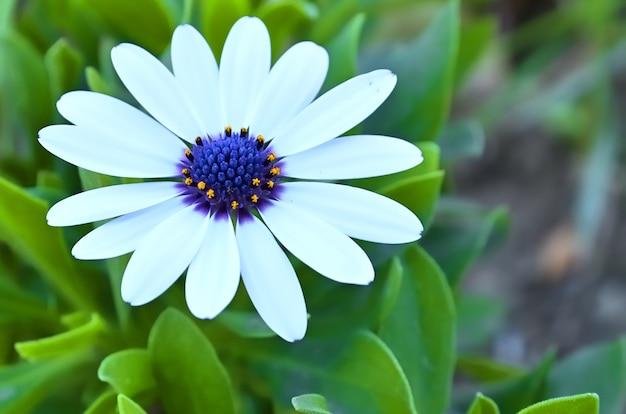 春先に芽生えたプリムローズの花