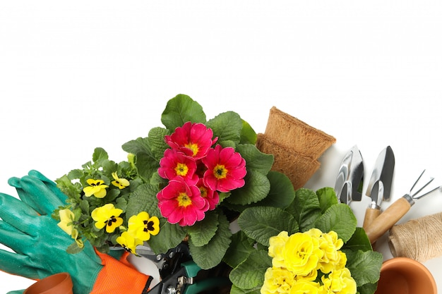 Primroses, pansies and gardening tools isolated on white isolated