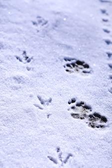 Печать на снежной земле в первый снежный день зимы. следы птицы в снегу крупным планом. зимний фон