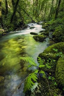 갈리시아의 as fragas do eume의 자연 공원에 있는 순수한 숲 강 세신의 깨끗한 시내