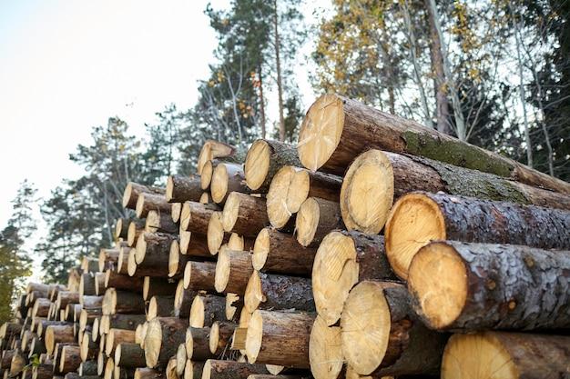 Процесс рубки хвойных деревьев