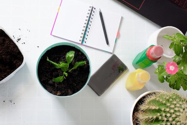自宅で発芽するために鉢植えの花を鉢に植えるプロセス。灌漑用のポールシッター、オンライン撮影プロセス用の電話とラップトップ。