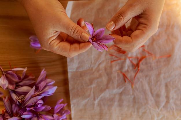 花の残りの部分からサフランストランドを分離するプロセス。