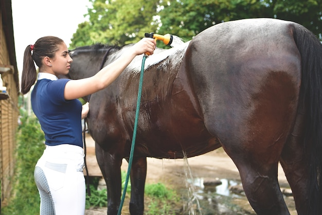 The process of washing the horse with water from a hose, preparing for the competition. recreation