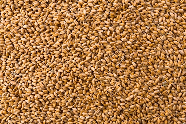 Processed organic golden wheat grains texture as agricultural background. lots of seeds, top view. harvest and farming, bread making business.