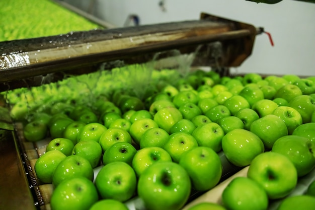 공장에서 녹색 사과 생산