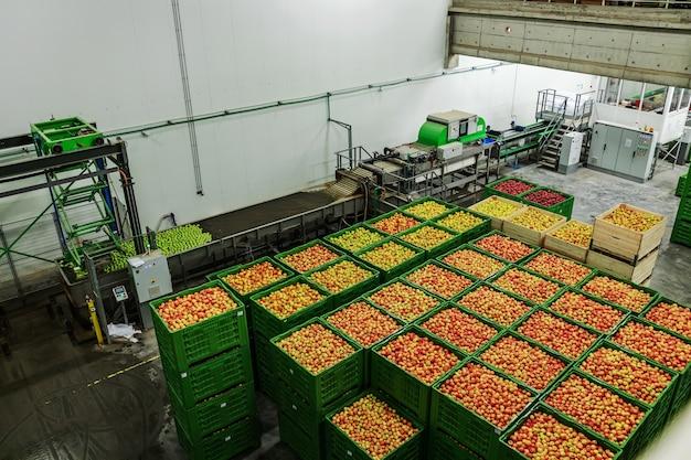 Завод по мойке, сортировке и упаковке яблок. хранение яблок разных сортов и цветов. вид сверху поддонов, полных свежих яблок для доставки. упаковка органических яблок