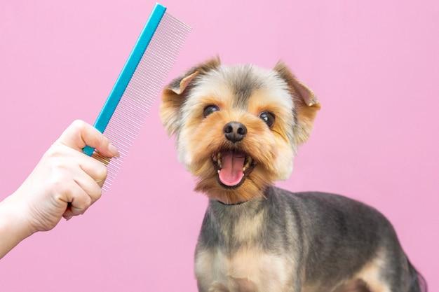 専門サロンでの犬の専門的ケア