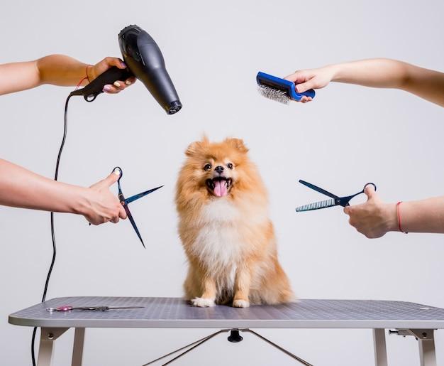 Профессиональные заботы о собаке в специализированном салоне