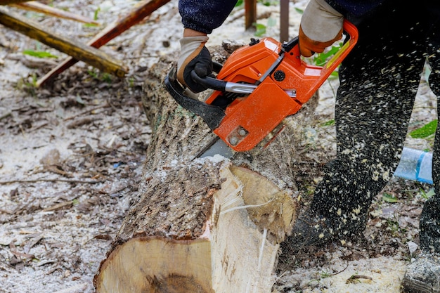 Профессиональные городские коммунальные службы рубят большое дерево в городе после урагана, повредившего деревья во время урагана