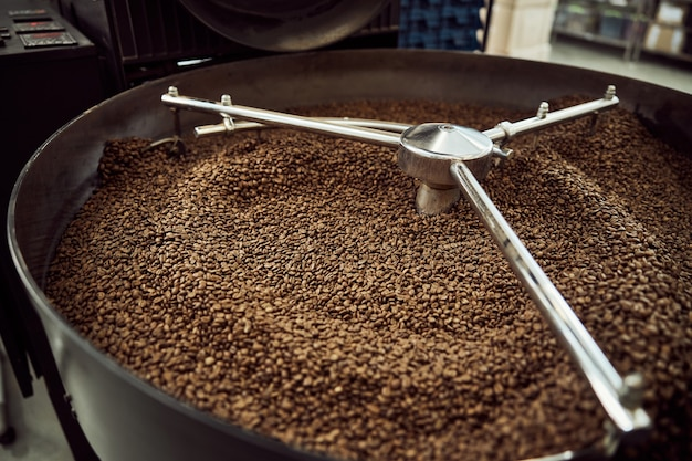 Professional coffee roasting machine with brown arabica coffee beans in stainless steel cooling bin