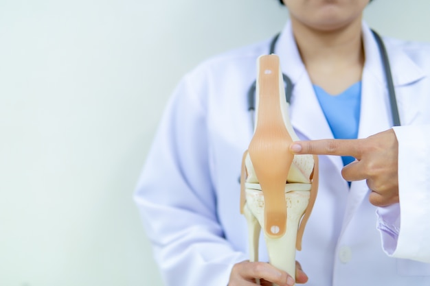 Professional doctor pointed on area of model knee joint.