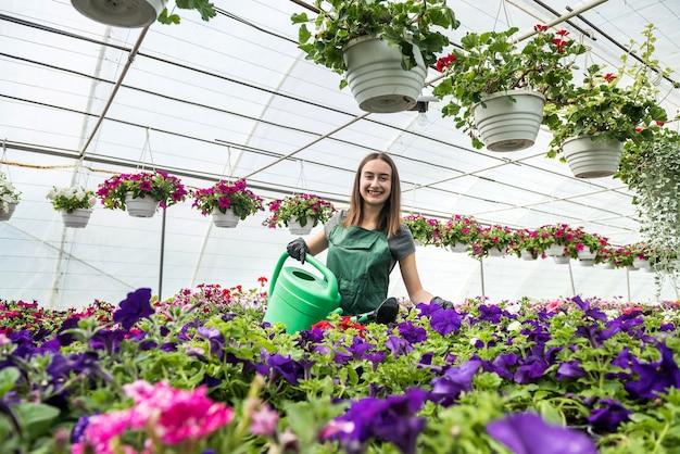 전문 여성 정원사 매일 급수 및 온실에서 꽃 관리