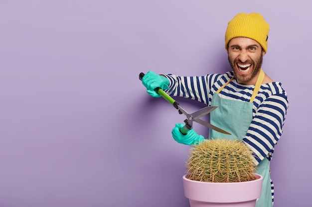 Professional male gardener holds secateurs, trims prickly cactus in pot, wears casual clothes, works at home, stands against purple wall