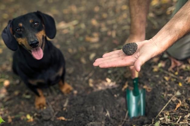 プロのキノコハンターと彼の訓練された犬は森の中でトリュフのキノコを見つけました