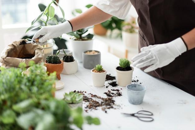 植物を植え替えるプロの植物保育士