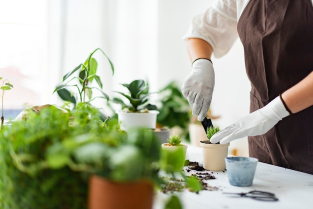 Professional plant nursery worker repotting a plant