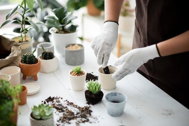 Lavoratore di vivaio professionista che rinvasa una pianta