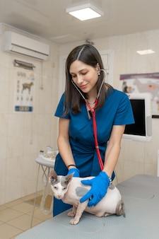 ペットクリニックで聴診器と医療制服試験ハゲ猫のプロの獣医の女性