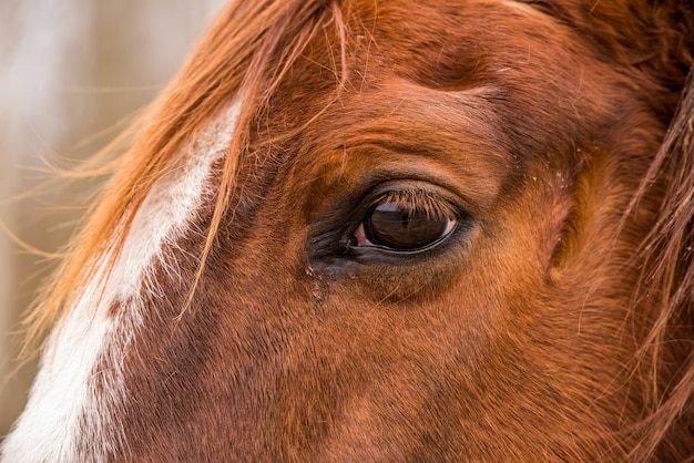 Profile close up eye of the brown horse outside
