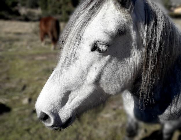 Profile white horse head