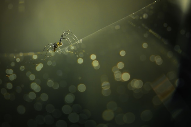 Profit spider and golden yellow light