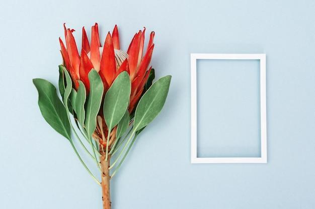 Protea 꽃, 큰 아름다운 식물과 파란색 표면에 흰색 프레임. 최소 구성