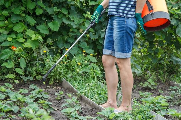 압력 분무기와 화학 약품으로 딸기 식물을 곰팡이 병이나 해충으로부터 보호합니다.