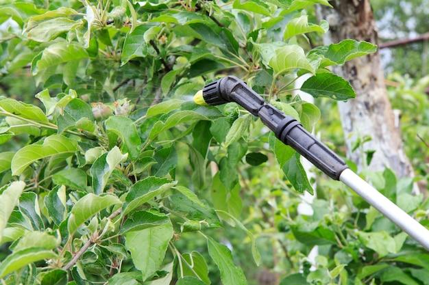 봄과 여름에 고압분무기로 어린 사과나무와 익은 과일을 곰팡이병이나 해충으로부터 보호