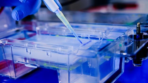 Разделение белка на гелях в камерах электрофореза. понятие науки, лаборатории и изучения заболеваний.