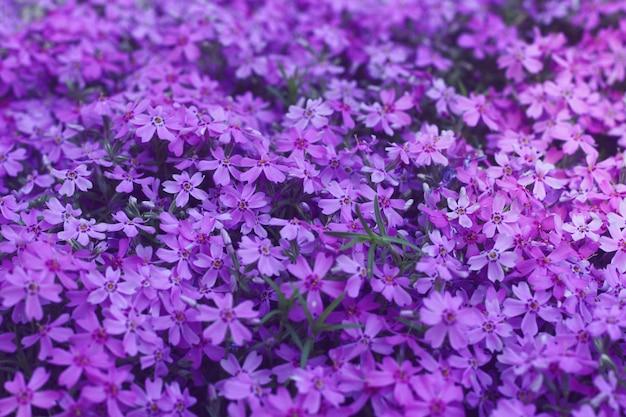 Proton purple flowers modern design backdrop.