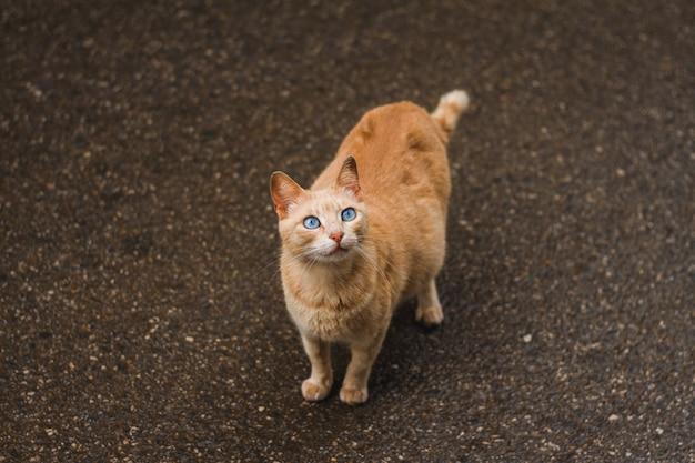 自慢の赤い猫