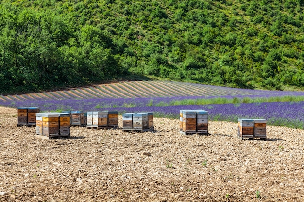 Provence, south france. beehive dedicated to lavander honey production.